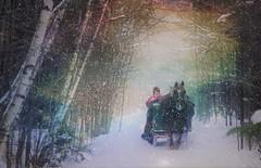 Cheval et grelot (Amiela40) Tags: traîneau neige bois forest forêt hiver chemin cheval horse tree