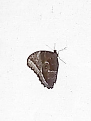 IMG_20180128_143833170 (EadaoinFlynn) Tags: magdeburg germany sachsenanhalt elbauenpark buttterflyhouse