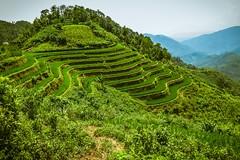 Výlet na motorce do Hoang Su Phi (zcesty) Tags: vietnam22 terasa rýže pole krajina hory vietnam dosvěta hàgiang vn