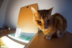 bulgakow (Jan Rillich) Tags: sigmafisheyedg15mmf28 sigma15mmf28exdgdiagonalfisheye wideangle weitwinkel funny fisheye fischauge cat
