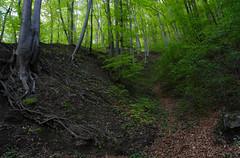 Along the laborer's trail in Călimăneşti-Căciulata (cod_gabriel) Tags: căciulata călimăneşti caciulata calimanesti woods wood forest aleeadecurăbalneară calimanesticaciulata călimăneşticăciulata padure pădure deciduous foioase deciduousforest paduredefoioase păduredefoioase fag beech