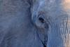 Botswana (venturidonatella) Tags: africa botswana elefante elephant animale animali animals animal occhio eye sguardo look grigio grey ritratto portrait