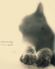 (Mister Blur) Tags: blur bokeh paws photogenic silhouette happy monochrome thursday furry friday shallow depthoffield dof blue russian cat chat gato nikon d7100 35mm f18 snapseed rubén rodrigo fotografía littledoglaughedstories littledoglaughednoiret