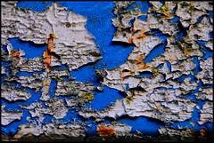 Changé (Sarthe) (gondardphilippe) Tags: changé sarthe maine paysdelaloire bleu blackandwhite texture blanc white ngc sundaylights
