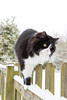 Tansy in the snow (Mark at Magdalen) Tags: pets tansy home westnorfolk location europe england britishisles magdalen unitedkingdom gb