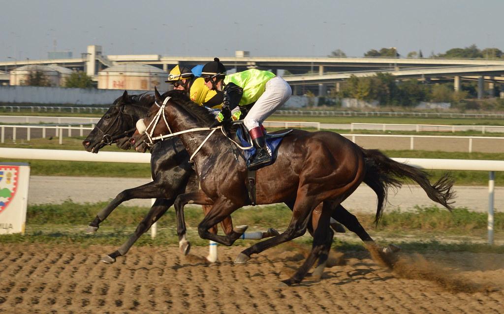 DSC 1820 Eminaknezevic Tags Horses Racing Gallop Hippodrome Horsephotography Horseracing Jockey Hipodrombeograd