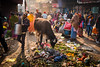 Litter Cow (*trevor) Tags: asia cow dog fujifilm india litter streetphotography travelphotography varanasi xt2 bustling littledoglaughedstories