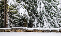 Ricksecker Point Road (rich trinter photos) Tags: mountrainier winter packwood washington unitedstates us landscape road rickseckerpointroad stonewall trinterphotos