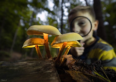 Liam (Eifeltopia) Tags: macro fun meulenwald mushroom pilze magnifyingglass lupe autumn herbst stripes kid smile wideangle germany rheinlandpfalz lights hiking wandern leafs wood trees forest trier flashlight