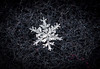 beauty of winter (Danyel B. Photography) Tags: winter snow cold flake abstract details structure ice water macro sharp