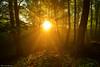 The Forest Awakens (Hector Prada) Tags: bosque amanecer luz niebla árbol dorado naturaleza bruma contraluz verano forest sunlight woods light mist golden warm backlight tree nature sunrise sun summer paísvasco basquecountry