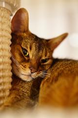 Itchy cat (DizzieMizzieLizzie) Tags: bestofcats