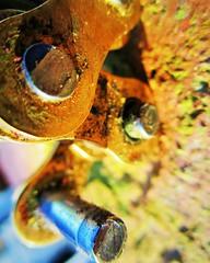 """Pinocchio""  (Fastener) HMM (seanwalsh4) Tags: smallsectionofchain pinocchio lying pareidolia riveted brasssteel macromonday fasteners hmm colourful useful canon bokeh canonixus195 outsideshot onlysunshine lovepeace macromondays h"