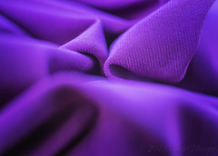 The Color Purple (Alida's Photos) Tags: myfavoritenovelfiction thecolorpurple macro macromondays myfavouritenovelfiction novel book
