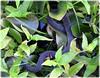 Sawgrass Lake Park - St Petersburg Florid (lagergrenjan) Tags: sawgrass lake park st petersburg florida snake