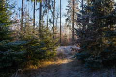 Sence of winter (Petr Sýkora) Tags: les zima nature forest winter frost trees ancient