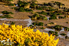 Heath to Beach (SLHPhotography1990) Tags: 2017 april nikon sandown sophs culver downs walk isleofwight isle wight area natural beauty outstanding country countryside rural landscape heath gause gauze bush yellow beach rocks seaweed