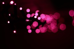(Klaudia D. P.) Tags: light fairylights xmas christmas festive decor decoration lights pink purple bokeh dof winter