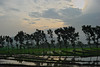 It is time for paddy planting (elly.sugab) Tags: farm farming farmer paddy rice planting terrace nature landscape traditional