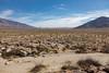 Clark Dry Lake Petroglyphs (W9JIM) Tags: borregosprings california unitedstates w9jim clarkdrylake abdsp anzaborrego 5d4 24mm 24105l