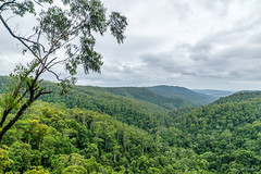 Down the valley (palbion) Tags: springbrook queensland australia au