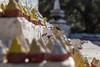 Chaos de stupa, Chagri Monastery (S. Torres) Tags: bhoutan bhutan bouddhisme buddhism monastery monastère stupa candel bougie monk gong or gold golden doré meditation prière drapeauxdeprière prayerflags prayer