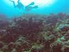 Fish swarm (Peter_069) Tags: tauchen diving scuba malediven maldives äqypten egypt wasser water underwater unterwasser padi fische fisch fish shellfish muscheln moräne moränen moraine batfish fledermausfisch koralle korallen coral nemo clownfisch clownfish boot boat vessel blaueswasser bluewater