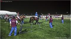 DSC03230 copy (Services 33159455) Tags: qatar doha horse racing qrec emir horseracing raytohgraphy