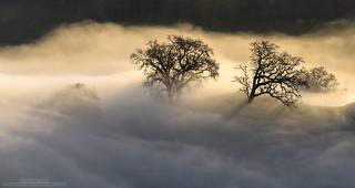 Fog and Light