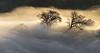 Fog and Light (michael ryan photography) Tags: fog mist light trees oaktrees sonoma sonomacounty california northerncalifornia michaelryanphotography