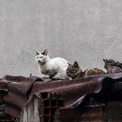 Istanbul.jpg (p_lippe) Tags: projetchat istambul istanbul turquie tr