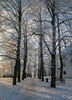 (LLOVGREEN) Tags: sunshine sun sunlight turku åbo suomi finland snow snowy winter january aurajoki river riverside aurariver riveraura varsinaissuomi linnapuisto castle turkucastle magic tree trees snowytrees golden hour goldenhour frost frosty turun