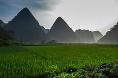 Ostré homole a rýžová pole - krajina severního Vietnamu (zcesty) Tags: vietnam20 rýže pole krajina hory vietnam dosvěta caobằng vn