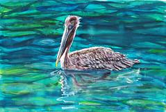 Pélican Martinique (Jluc22fr) Tags: jluc painting watercolor travel martinique 2017 wip pélican final bird westindies art travelbook