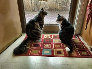Peppy & Kewpie: Conversations