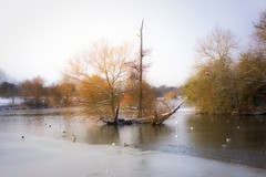 Lake in the park ... (Julie Greg) Tags: lake nature colours park landscape sky snow tree england water