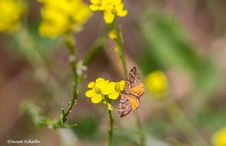 An unknown moth