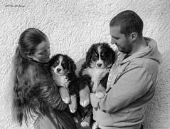 DSC00290-Edit (sportsHUN) Tags: landscape babys dogs puppies portre