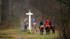 Vénerie (Phil du Valois) Tags: vénerie forêt domaniale compiègne chasse courre