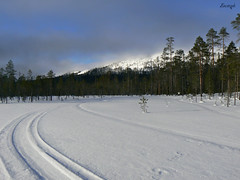 Taïga (Escarpel Photographie) Tags: woods winter snow snowwinter winteriscoming forest firtrees powdersnow twilight lapland hill nature wild wilderness intothewild finland north naturalphotography landscape february lumix travel travelphotography trail ride hiking white taiga scrubland