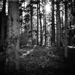 between trees and us (gato-gato-gato) Tags: 35mm 6x6 75mm ch iso800 ilford ls600 nikkorp nikkorp12875mm nikon noritsu noritsuls600 s2a slr switzerland wetzikon zenzabronica zenzabronicas2a analog analogphotography believeinfilm film filmisnotdead filmphotography flickr gatogatogato gatogatogatoch homedeveloped mediumformat tobiasgaulkech wwwgatogatogatoch zürich schweiz black white schwarz weiss bw blanco negro monochrom monochrome blanc noir streetphotography street strasse strase onthestreets streettogs streetpic streetphotographer mensch person human pedestrian fussgänger fusgänger passant suisse svizzera sviss zwitserland isviçre zuerich zurich zurigo zueri landschaft landscape landscapephotography outdoorphotography