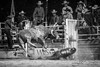 Walcha Rodeo 8. (jasoncstarr) Tags: rodeo walcha nsw cowboy cowgirl cow buckingbronc bronc bull bullriding steerwrestling ropeandtie roping canon canoneos6d 70200mm tamron70200mmf28lens blackwhite bw monochrome sport clowns