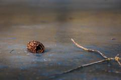 allein auf dem Eis (Sylsine) Tags: gewässer hexenteich jahreszeiten landschaft menden natur teich winter tannenzapfen eis