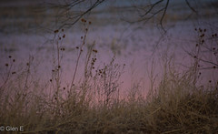Light at the Lake (nebulous 1) Tags: lightatthelake bosquedelapache newmexico lake light reflection weeds plants sunrise nikon nebulous1 glene