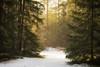 Heavens Gate (der_peste (on/off)) Tags: forest raysoflight sunrays crepuscularrays trees mood moody snow woods light shadow sunlight sunbeam winter