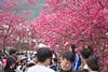 泰安派出所-DSC_0077 (linlin055) Tags: 泰安派出所 櫻花季 櫻花 戶外 台中市 泰安