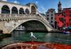 Venice, Rialto Bridge (R.o.b.e.r.t.o.) Tags: venezia venice veneto italia italy canalgrande grandcanal people architecture river water gabbiano seagull riflessi reflexes pontedirialto bridge