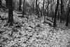 Winter2017-18_SAF8456 (sara97) Tags: cliffcavepark copyright©2018saraannefinke missouri outdoors photobysaraannefinke saintlouis snow winter winter201718 winterweather