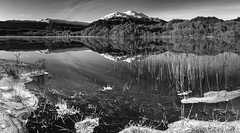 Loch Achray Panorama (roseysnapper) Tags: loch achray nikkor 2470 f28 nikon d810 black white circular polarizer scotland trossachs beauty calm frost frozen grass ice lake landscape monochrome mountain outdoor peaceful quiet reflections sky tranquil water winter silverefexpro nikcollection