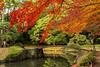 IMG_3442 (Matthew_Li) Tags: red leaf japan maple leaves